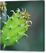 Baby Cactus - Macro Photography By Sharon Cummings Canvas Print