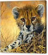 Baby Cheetah  Canvas Print