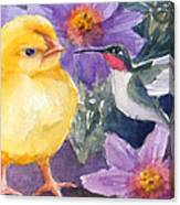 Baby Chick And Hummingbird Canvas Print