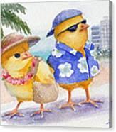 Baby Chicks In Honolulu Hawaii Canvas Print