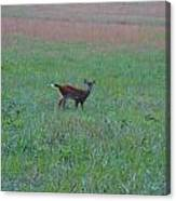 Baby Deer At Sunrise Canvas Print