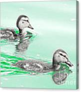 Baby Ducklings Canvas Print