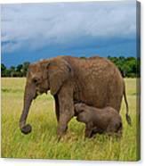 Baby Elaphant Canvas Print