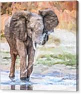 Baby Elephant Spraying Water Canvas Print