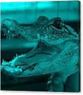 Baby Gator Turquoise Canvas Print