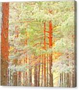 Baby Its Cold Outside But The Trees Don't Freeze  Canvas Print