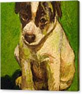 Baby Jack Russel Canvas Print