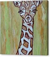 Baby Longneck Giraffe Canvas Print