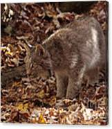 Baby Lynx Hunting In An Autumn Forest Canvas Print