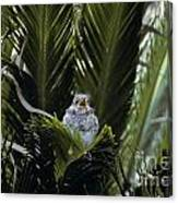 Baby Mockingbird Canvas Print