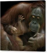 Baby Orangutan & Mother Canvas Print