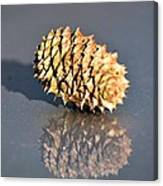 Baby Pine Cone Canvas Print