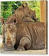 Baby Rhino And Mom Canvas Print