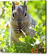 Baby Rock Squirrel  Canvas Print