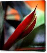 Baby Rubber Tree Canvas Print