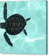 Baby Sea Turtle Canvas Print