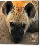 Baby Spotted Hyena Canvas Print