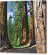 Bachelor And Three Graces In Mariposa Grove In Yosemite National Park-california Canvas Print