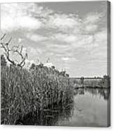 Back Bay In Bw Canvas Print