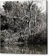 Back Bay Wildlife Refuge Canvas Print