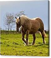 Back Light Horse Canvas Print