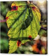 Back Lite Fall Leave Canvas Print