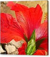 Back Of A Red Hibiscus Flower Against Stone Canvas Print