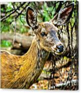Back-tail Doe Canvas Print