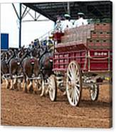 Back View Anheuser Busch Clydesdales Pulling A Beer Wagon Usa Canvas Print