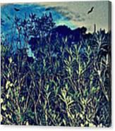 Back Yard Sky Canvas Print