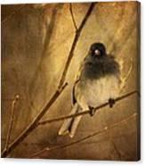 Backlit Birdie Being Buffeted  Canvas Print