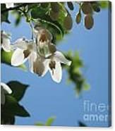 Backlit Blossom Canvas Print