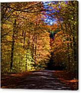Backlit Canopy Canvas Print