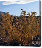 Backlit Desert Foliage Canvas Print