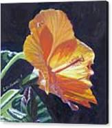 Backlit Hibiscus Canvas Print