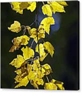 Backlit Leaves Of Autumn Canvas Print