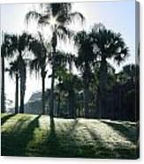 Backlit Palms Canvas Print