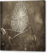 Backlit Spider Web In Sepia Tones Canvas Print