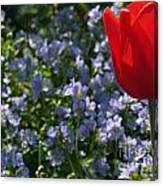 Backlit Tulip And Jacob's Ladder Canvas Print