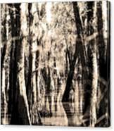 Backwater Cajun Country Canvas Print