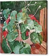 Backyard Begonia Canvas Print