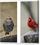 Backyard Bird Set Canvas Print