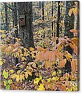 Backyard Birdhouse Canvas Print