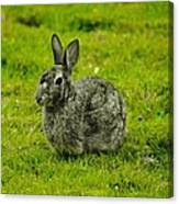 Backyard Bunny In Black White And Green Canvas Print