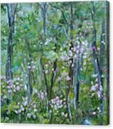 Backyard Mountain Laurel Canvas Print