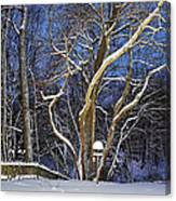 Backyard Trees Canvas Print