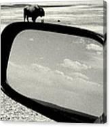 Badlands Bison Climbs Colossal Car Canvas Print