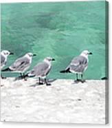 Bahama Birds Canvas Print