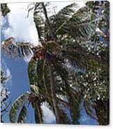 Bahamas Sky Canvas Print