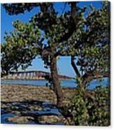 Bahia Honda Rail Bridge And Tree Canvas Print